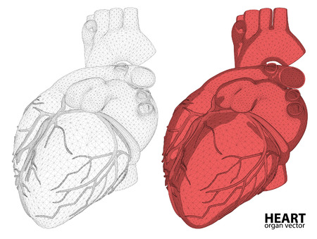 male model torso: 3d Heart wireframe mesh digestive system isolated on background