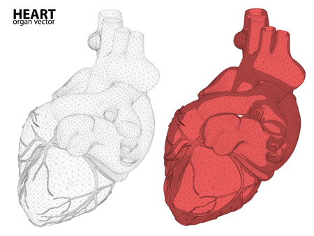 heart abstract: 3d Heart wireframe mesh digestive system isolated on background