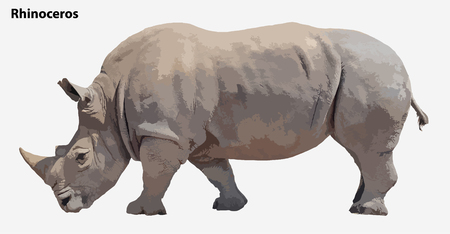 huge: huge rhino. vector Illustration