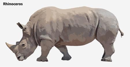 rhino vector: huge rhino. vector Illustration