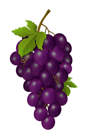 viticulture: Grapes on white background. Vector