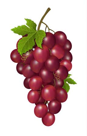 white grape: Grapes on white background. Vector