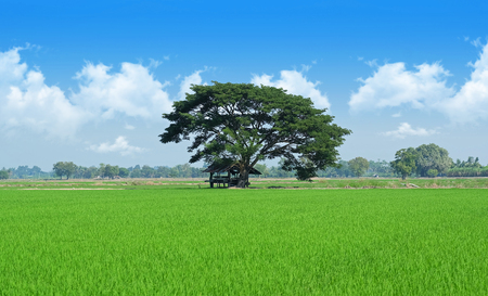 vacant land: Field trees and blue sky