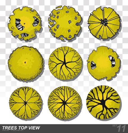 view icon: Vector - A set of Trees - top view. use in your landscape design.vector illustration