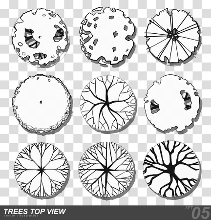 wooden circle: A set of Trees - top view. use in your landscape design. illustration Illustration