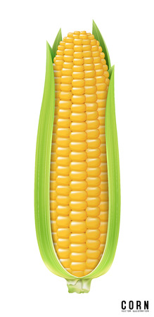 Ripe corn on the cob. design element