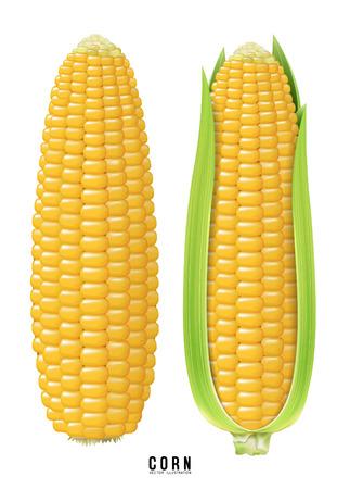 Corn. vector Illustration