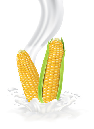 Corn falling into the milky splash. Vector illustration Illustration