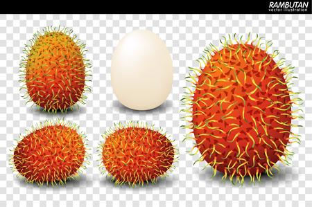 Rambutan Fruit Vector Isolated. Exotic tropical fruits vector. Juicy and ripe fruit. Natural organic fruits rambutan. vector illustration.