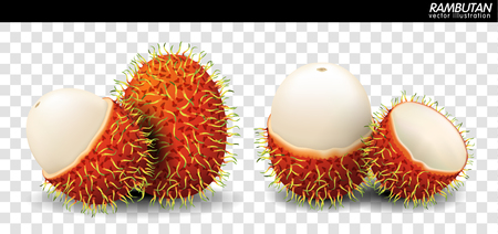 Rambutan Fruit Vector. a realistic style. Isolated objects on background. Ilustração