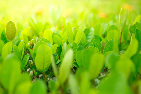 Green shrubs With sunlight on the blurred background.