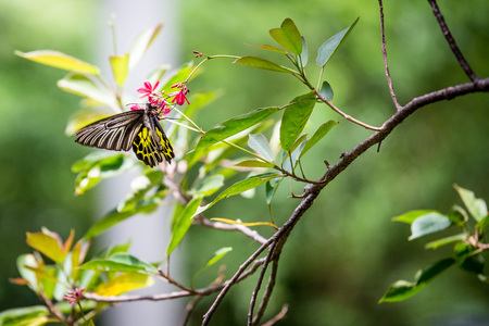Beautiful butterfly on leaf with natural background