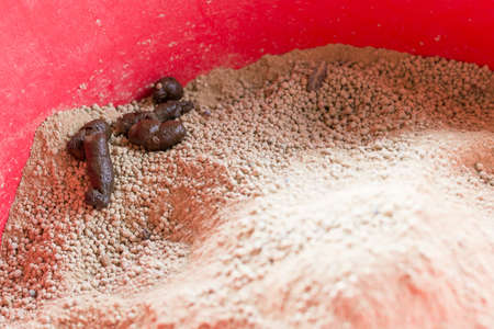 Feces of cats In the red sandbox Stock Photo