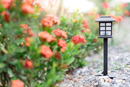 Solar lamps with sunlight in the flower garden