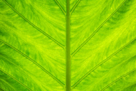 Close up of Beautiful Pattern Green leaf texture background