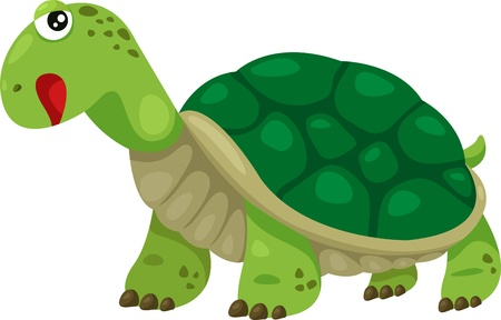 Illustrator of turtle Vector