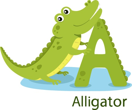 Illustrator of A with alligator Vector