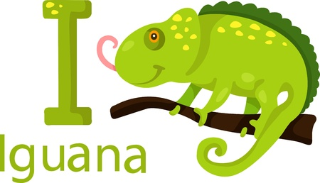 Illustrator of I with iguana Vector