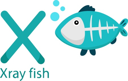 Illustrator of X with x-ray fish Vector