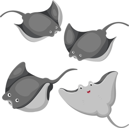 Illustrator of Stingrays Vector