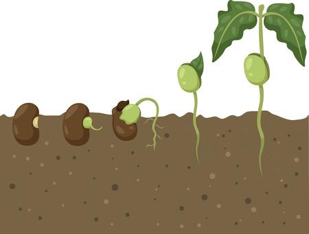豆サイクルのイラストレーター  イラスト・ベクター素材
