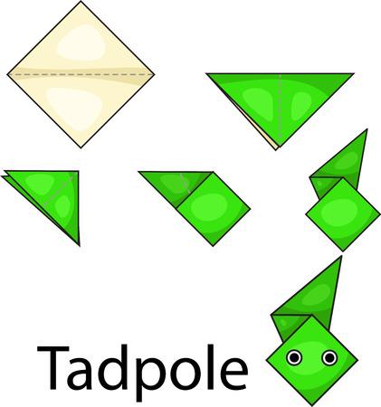 tadpole: Illustrator of origami with tadpole Illustration