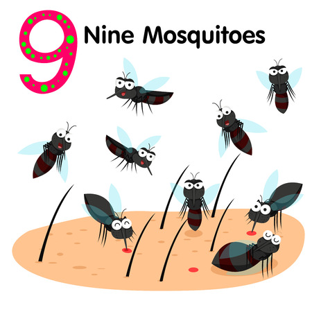 insect mosquito: Illustrator of number nine mosquitoes Illustration