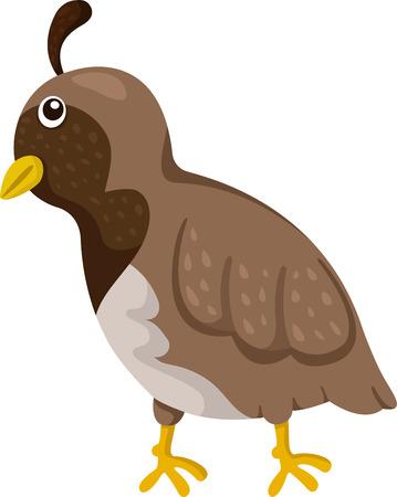 Illustrator of quail Ilustração