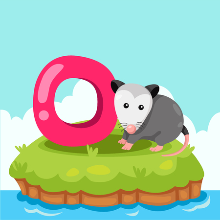 opossum: Illustrator of Letter o is for opossum Illustration