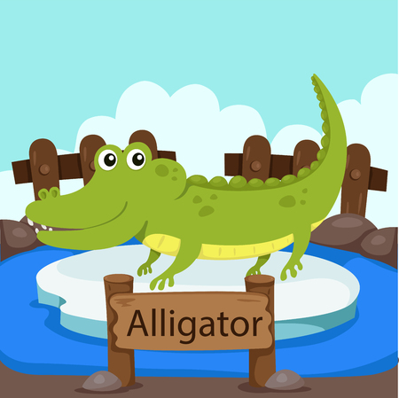 zoo: Illustrator of Alligator in the zoo Illustration