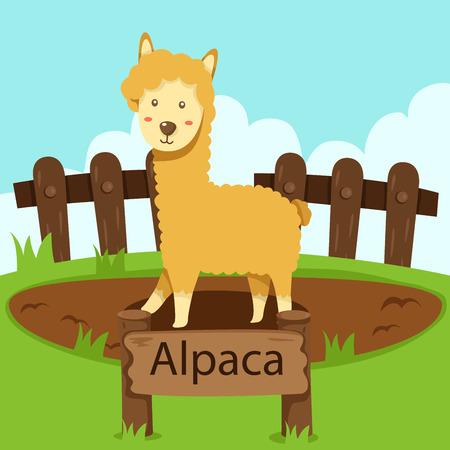 Illustrator of Alpaca in the zoo Vector
