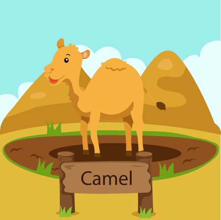 hump: Illustrator of camel in the zoo Illustration