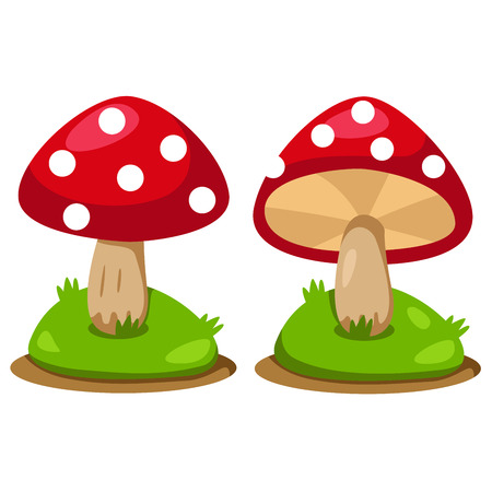 edible mushroom: Illustrator of mushrooms