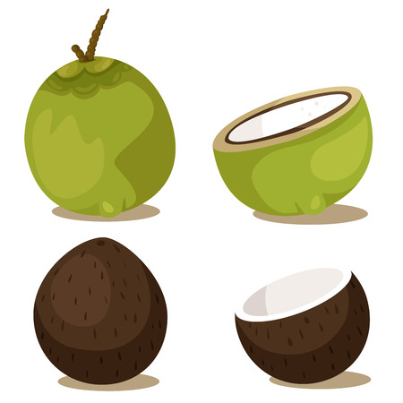 Illustrator of coconut set