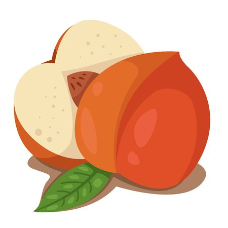 intact: Illustrator of peach fruit