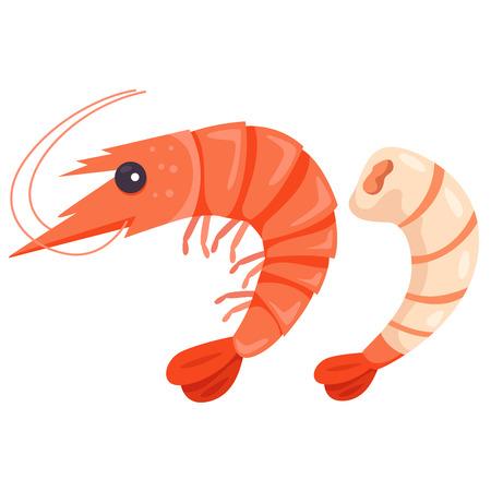 gamba: Ilustrador de camarones Vectores