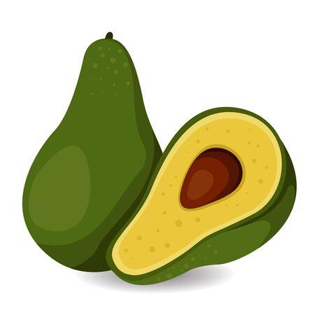 avocado: Illustrator of Avocado fruit