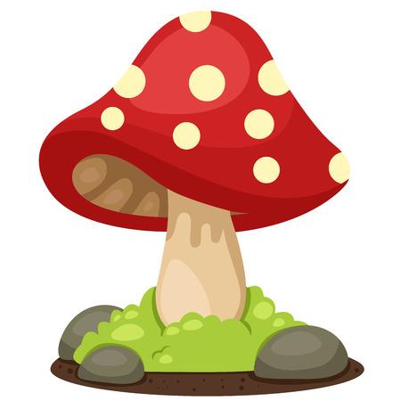 edible mushroom: Illustrator of mushrooms landscape