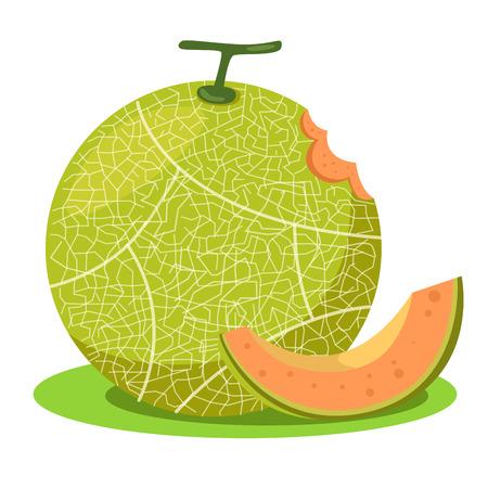 Illustrator of melon orange
