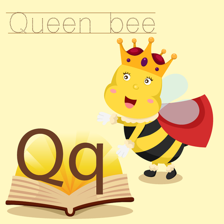 abeja reina: Ilustrador de q para el vocabulario de la abeja reina