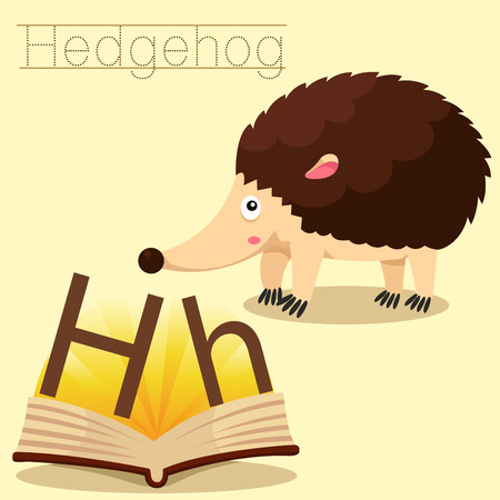 vocabulary: Illustrator of h for hedgehog vocabulary Illustration