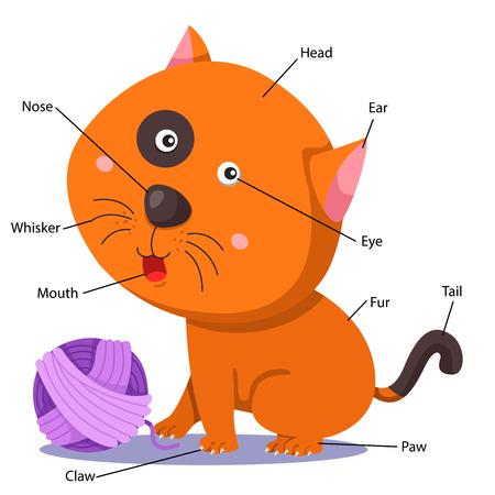 Illustrator of cat body part Illustration