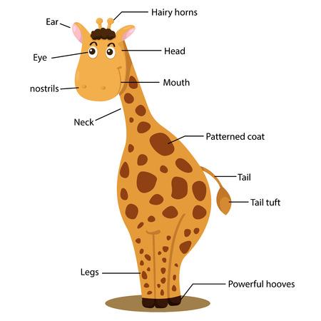 Illustrator of giraffe body part Ilustração