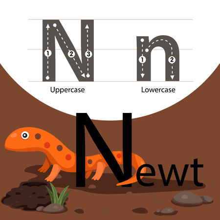 newt: Illustrator of newt with a font