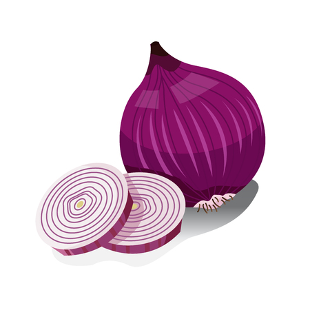 Illustrator of Shallots Vectores