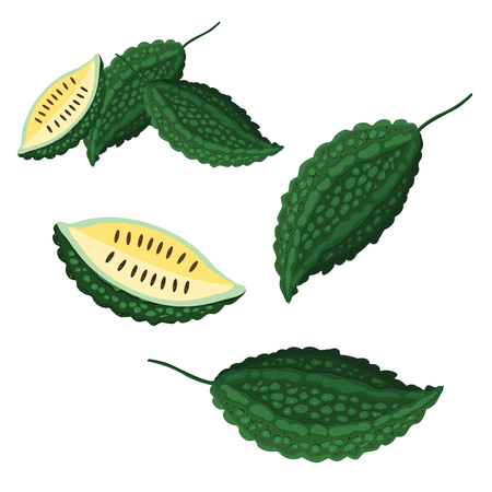 Illustrator of balsam apple
