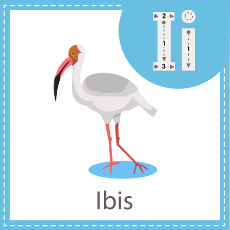 Illustrator of Ibis bird