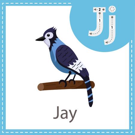Illustrator of Jay bird Illustration