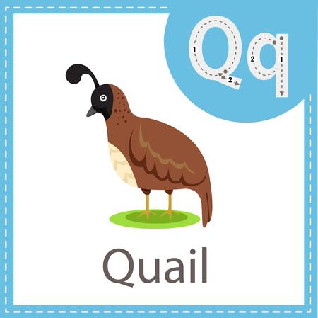 Illustrator of Quail bird Imagens - 121281495