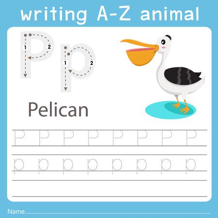 Illustrateur de l'écriture az animal p pélican Vecteurs